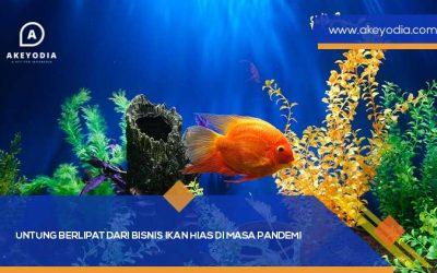 Untung Berlipat dari Bisnis Ikan Hias Di Masa Pandemi
