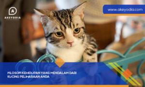 Filosofi Kehidupan yang Mendalam dari Kucing Peliharaan Anda